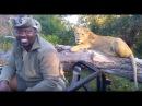 Lioness sneaks up behind Safari Guide ! Kruger National Park
