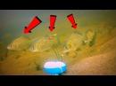 Манка с чесноком в действии Щука карась окунь плотва Подводная съемка