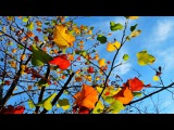 Музыка и краски моей души. Владимир Пресняков, ст. ВидеоКанал exZotikA Max