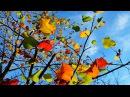 Музыка и краски моей души Владимир Пресняков ст ВидеоКанал exZotikA Max