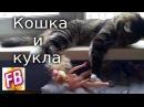 Кошка играет с куклой