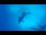 Плавание с дельфинами (Копиевская Катерина) 12.07.2017