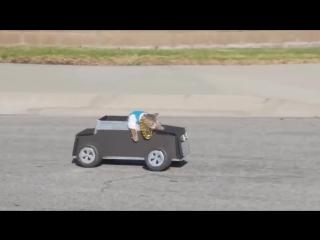 ЛУЧШИЕ ПРИКОЛЫ с котами Самые смешные видео про кошки и коты Подборка приколов н