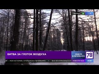 Битва за глоток воздуха. Сюжет программы «Неделя в Петербурге». 10.12