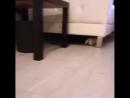 Ну очень агресивный котенок Угарное видео