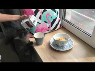 Молоко Свежее завтра и кот