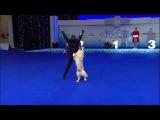 Это невероятно! 1 место Чемпионата РКФ по танцам с собаками... Волков Илья и мегаумный и музыкальный ретривер Ллойд выиграли в классе Мастер- Фристайл!! Просто браво!!! #TheOnlyOne рад, что для своего выступления они выбрали мою пе