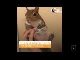 Белка спасенная от урагана #спасенные животные канал онлайн Эмоции животных