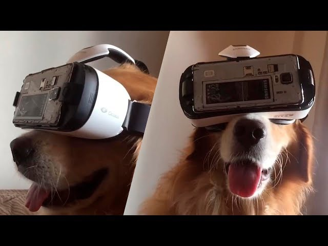 TRY NOT TO LAUGH or SMILE Watching Funny Animals 🐶 If You Laugh You Lose ★43 (Animal Edition)