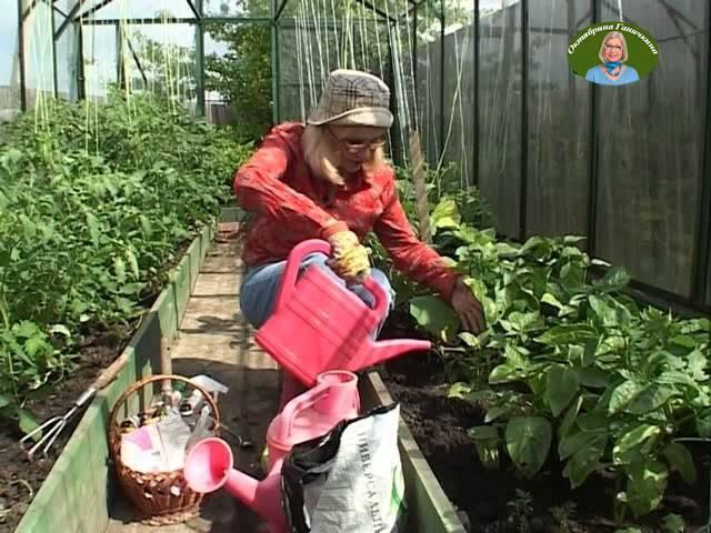 Выращиваем перцы с Октябриной Ганичкиной