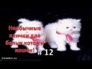 Необычные клички для белых котов и кошек!Смешные животные 12
