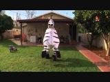 Zebra Dubstep