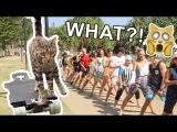 CAT Breaks Skateboarding WORLD RECORD