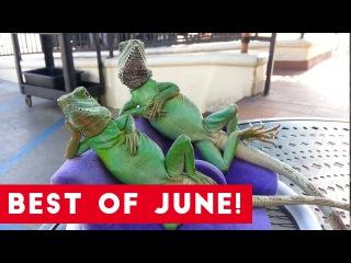 Funniest Pet Reactions & Bloopers of June 2017   Funny Pet Videos