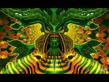 Черенкование (способ без парника) Шалфея Предсказателей  Salvia Divinorum