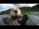 Cute overload! Spy Otter gets intimate look at adorable otters