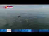 В залив у берегов Кроноцкого заповедника на Камчатке зашла стая редких горбатых китов