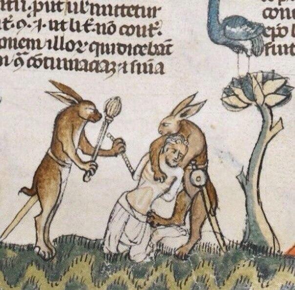 Про средневековых зайцев