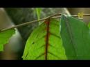 Нетронутые уголки дикой природы 2014 амазонка
