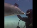 Поцелуи дельфинов