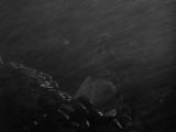 Грозовой перевал  Wuthering Heights (Уильям Уайлер, 1939)