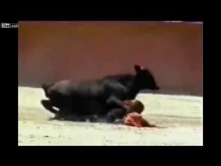 Карлик матадор против молодого бычка.
