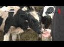 Веневец на месте заброшенного ангара открыл собственную ферму