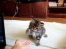 Котенок дает лапу Ржака