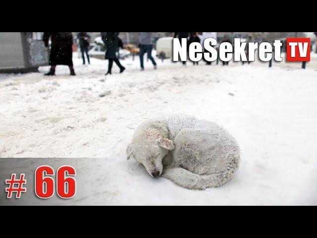 Спасаем брошенную собаку. Спасение 66. Город Улан-Удэ.