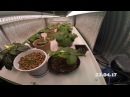 Рост земляники на гидропонике 1 день=10сек