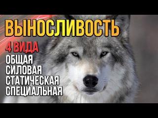 Выносливость Волка Почему нужна выносливость любому человеку dsyjckbdjcnm djkrf gjxtve ye;yf dsyjckbdjcnm k.,jve xtkjdtre