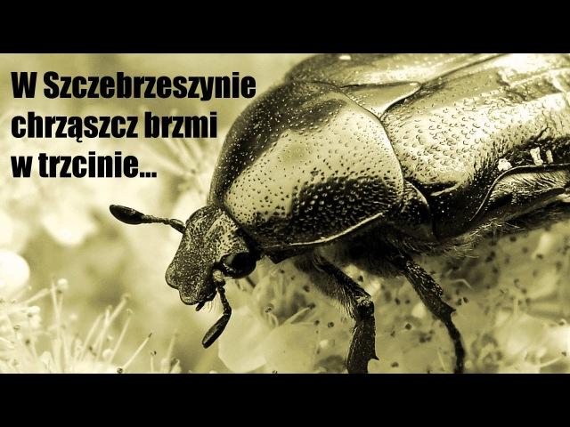 Łamacz językowy - W Szczebrzeszynie chrząszcz brzmi w trzcinie » Freewka.com - Смотреть онлайн в хорощем качестве