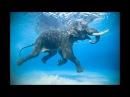 Слоны под водой