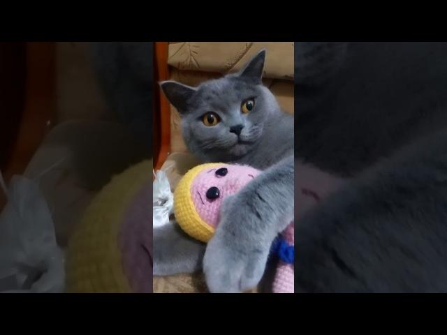 Кот любитель рукоделия..! Мой Кот начал заниматься Рукоделием / My Cat started doing needlework