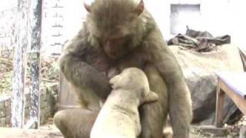 Monkey-puppy love 1 (1).wmv