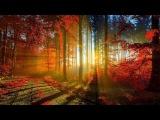 Пение вечернего леса Голоса природы на закате в лесу Singing evening forest sounds of nature