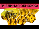 Пчелиная обножка - эликсир молодости. Полезные свойства пыльцы. Обножка пчелиная полезные свойства!