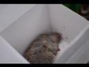 Похороны Тамарки Крысовой