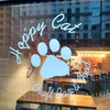 Hoppy Cat (бар крафтового пива)