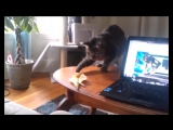 Смешные кошки приколы про кошек и котов 2017 #29 (Коты и огурцы Funny cats)
