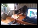 Смешные кошки приколы про кошек и котов 2017 29 Коты и огурцы Funny cats