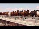 клип про лошадей 3