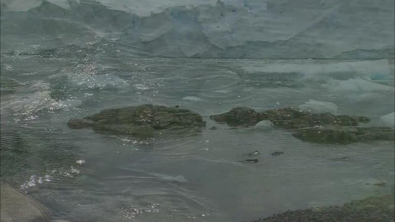 Антарктика - Дикая жизнь на льду (2006)