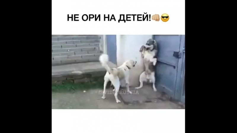 Собачьи семейные разборки
