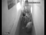 Киев. Комбат «Торнадо» отрезал ухо боевику из своего же батальона...