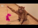 Чудесное спасение рыжего кота