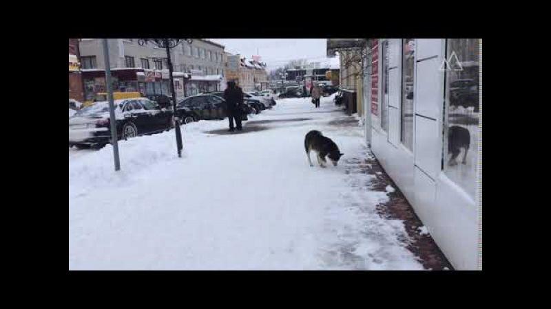 Учитывая новость про случай бешенства, при виде собак на улицах города страшнов ...
