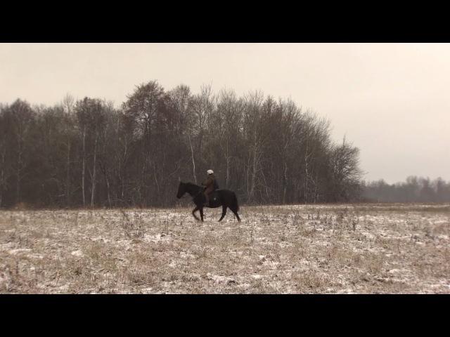 Сотрудница «Почты России» развозит посылки на коне