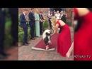 Самые смешные ПРИКОЛЫ С ЛОШАДЬМИ, Смешные лошади Funny horse 3