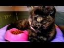 Котенок Мисс Кейти гуляет в парке в Англии Что Катя подарила Алис Лебедь ущипну...